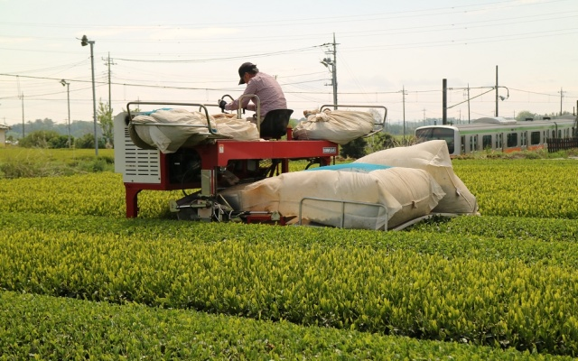 茶摘み乗用型