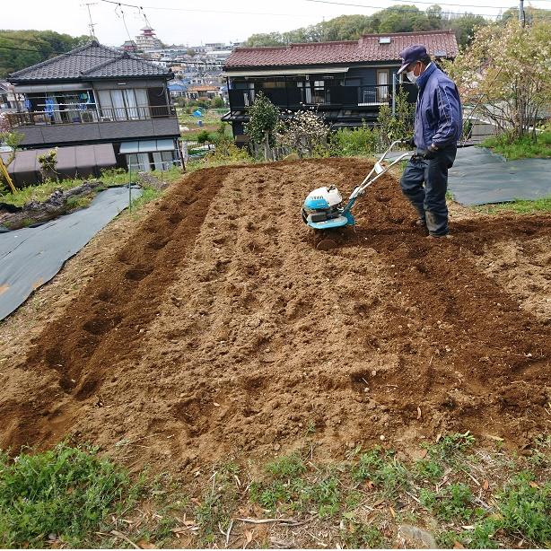 エゴマ畑0408-1